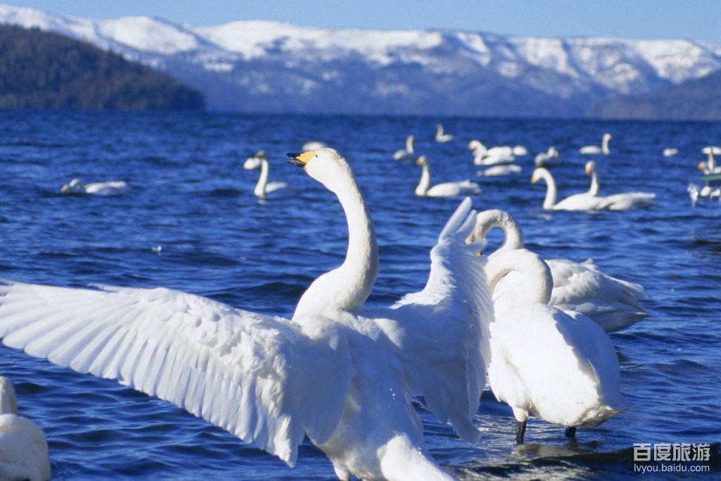 威海天鹅湖